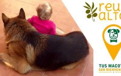 Más de la mitad de las casas rurales en España no admiten mascotas, no son pet-friendly
