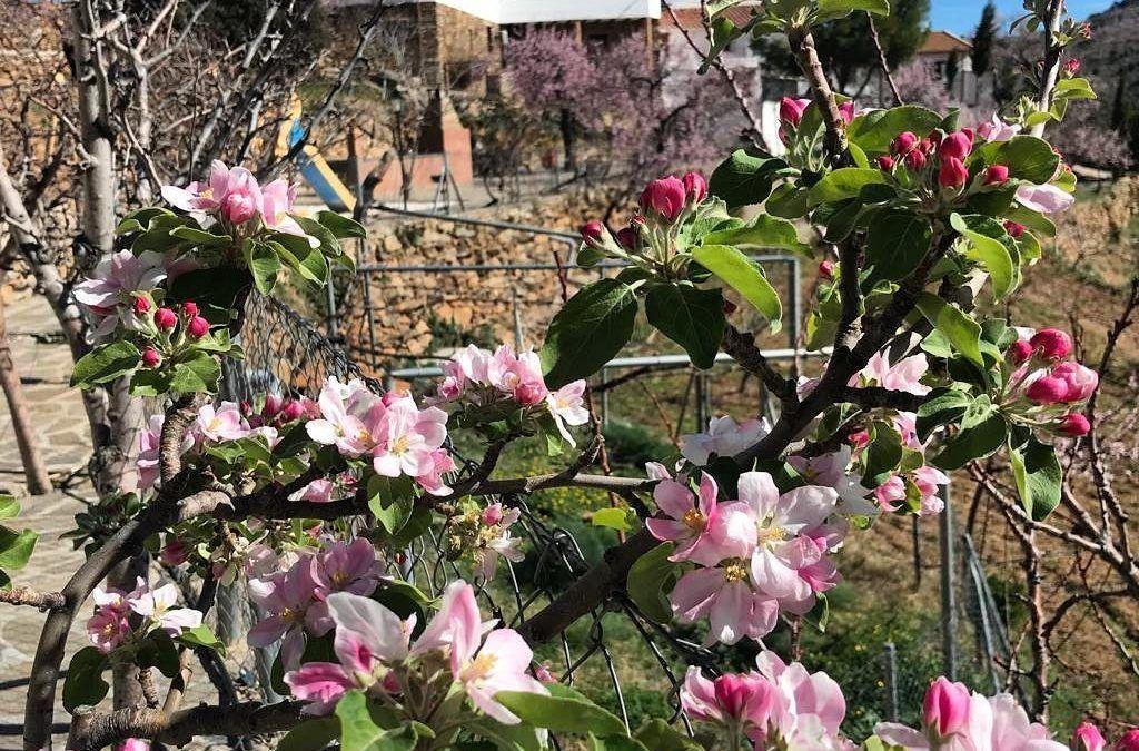 Llega la Primavera a Reul Alto